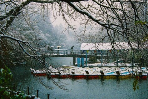 It is said that, if you ride the boats on Inokashira Park's pond with a girlfriend, you will surely break up soon.